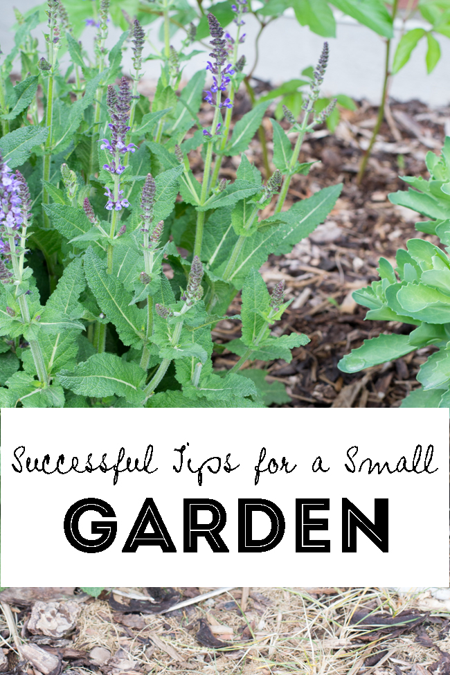 Successful Tips for a Small Garden